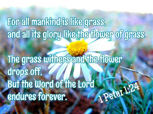 1 Peter 1:24-25 AMP  For all flesh (mankind) is like grass, and all its glory (honor) like [the] flower of grass. The grass withers and the flower drops off, But the Word of the Lord (divine instruction, the Gospel) endures forever. And this Word is the good news which was preached to you. [Isa. 40:6-9.]