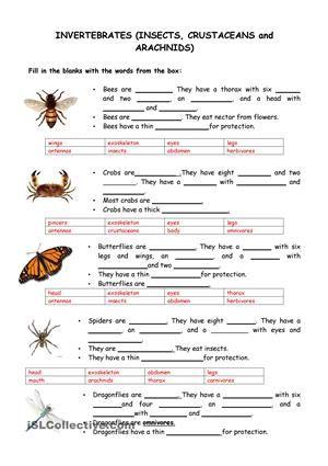 Vertebrate Worksheet - Museum of Natural History