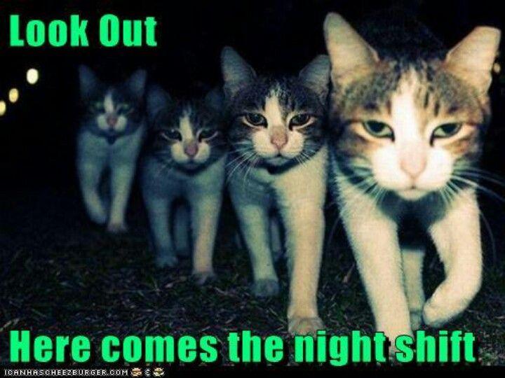 night shift bahahaha - so how I feel walking into work ...