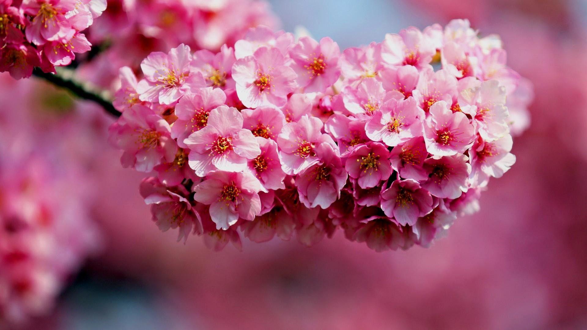 1080p Beautiful Nature Wallpaper Flower Desktop Background