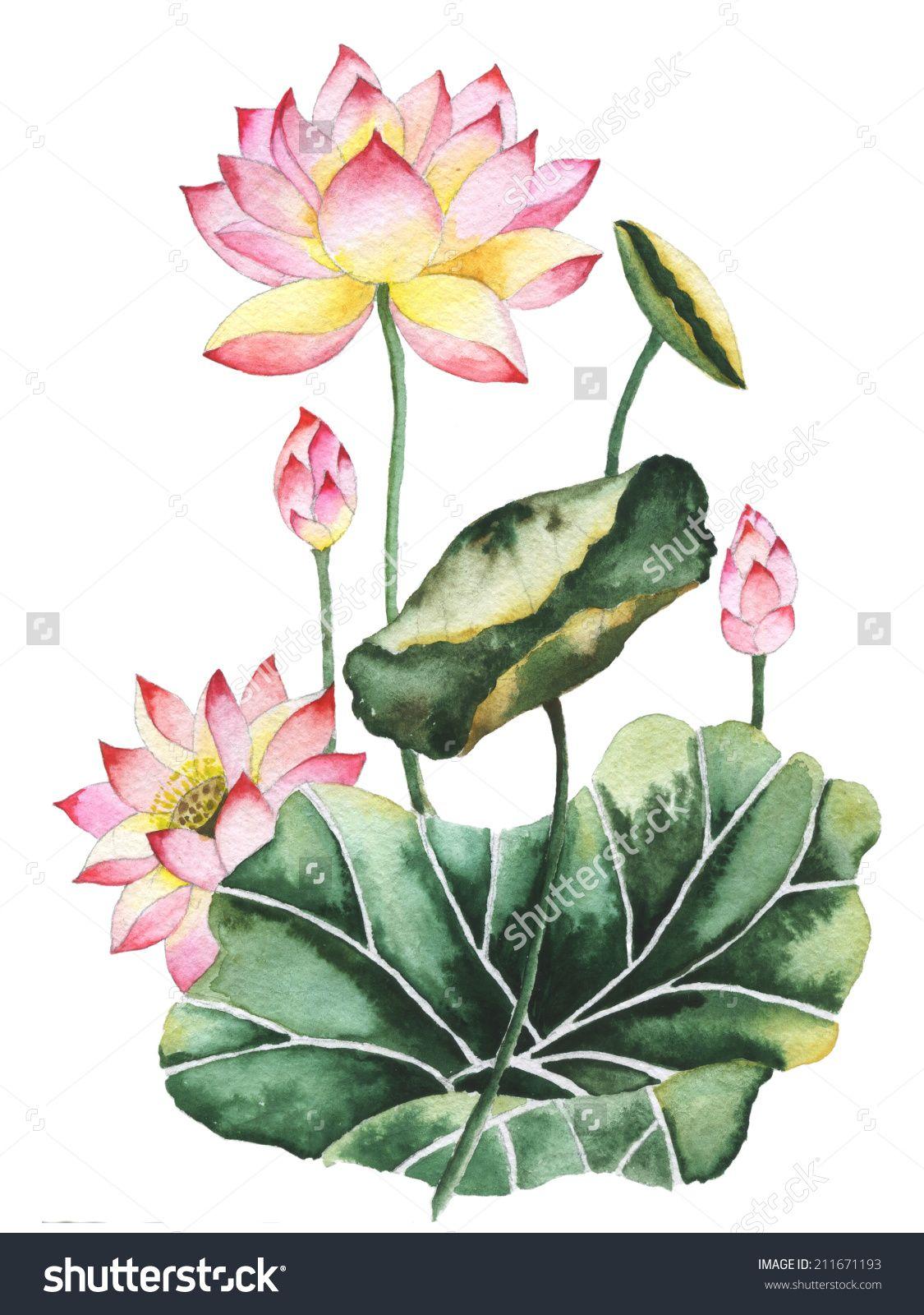Watercolor Painting Of Lotus Flowers Oriental Style Lotus