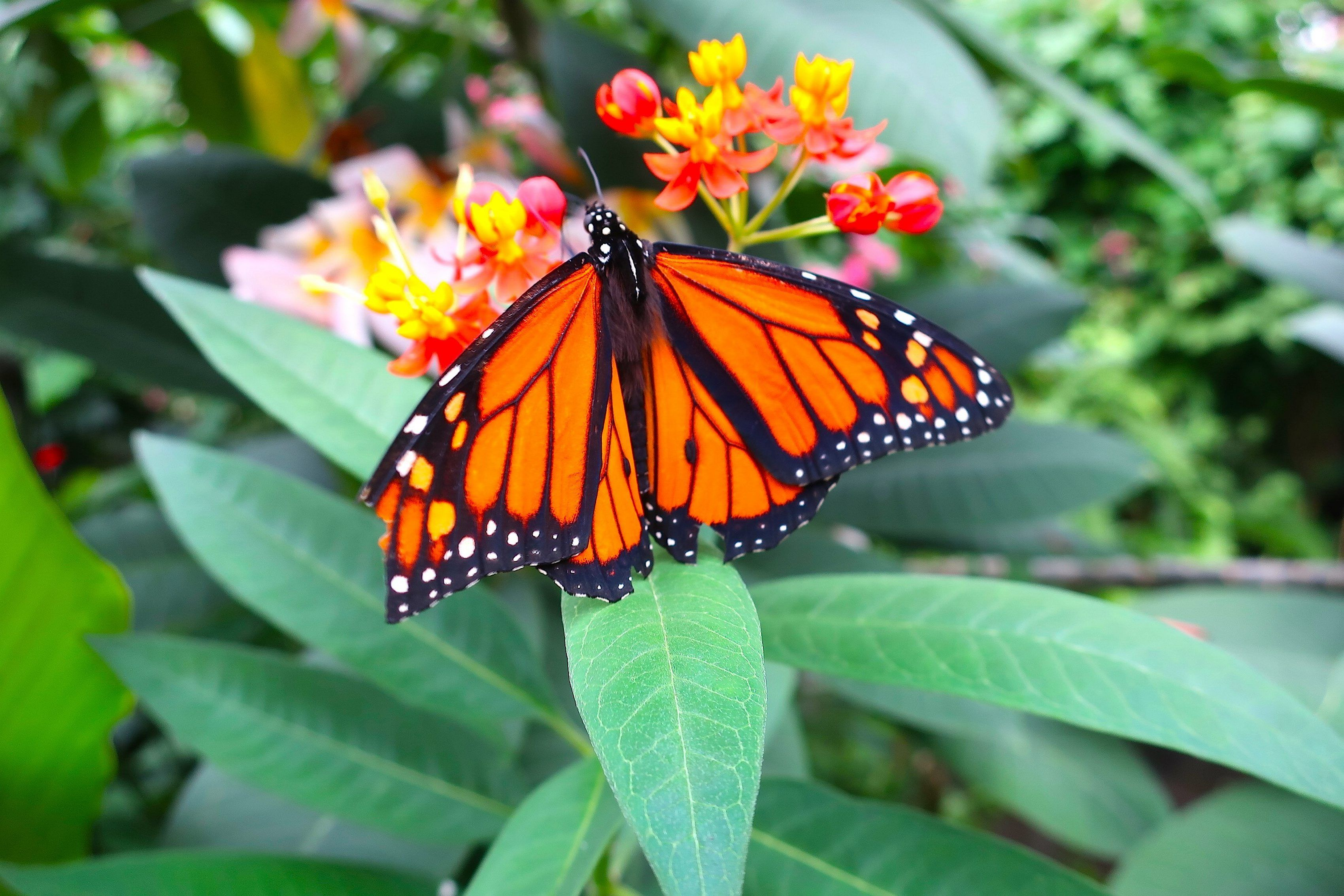 Education On Monarch Butterflies Takes Flight