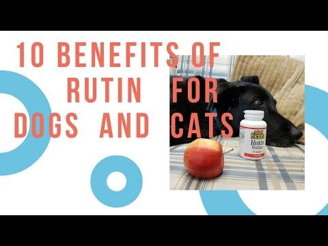 10 Benefits of Rutin For Dogs. Cats and People - YouTube   Dogs. Rutin. Food animals
