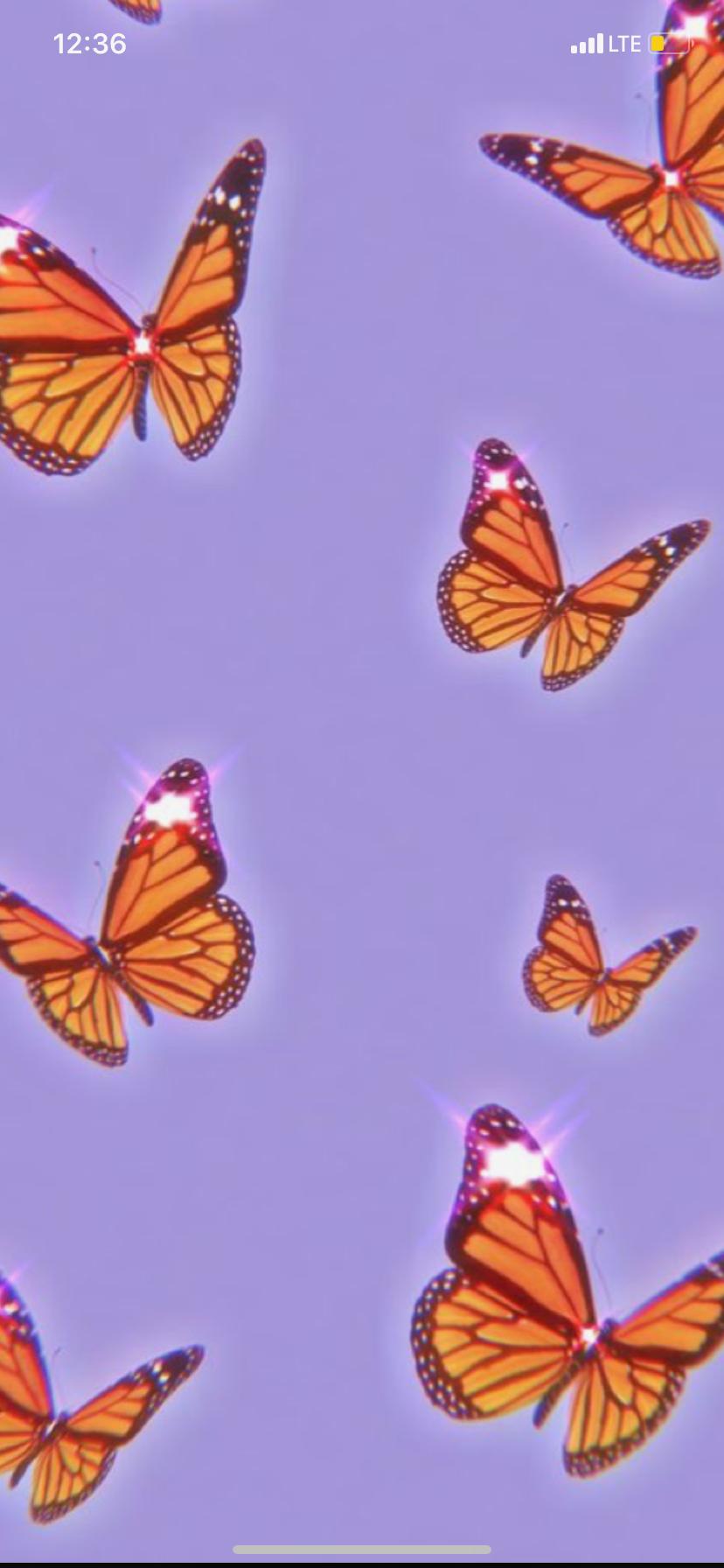 Pin By Rachel Gallardo On Cute Wallpapers In 2020 Pink Wallpaper Iphone Butterfly Wallpaper Blue Butterfly Wallpaper