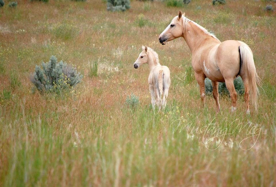 Pin by Susan Hobbs on Horses Wild horses, Horses, Horse love