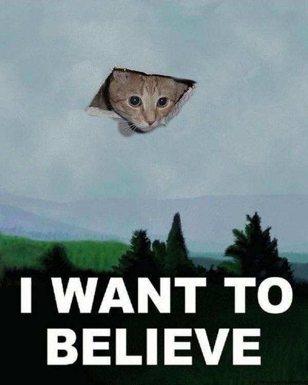 x files cat meme - Google Search