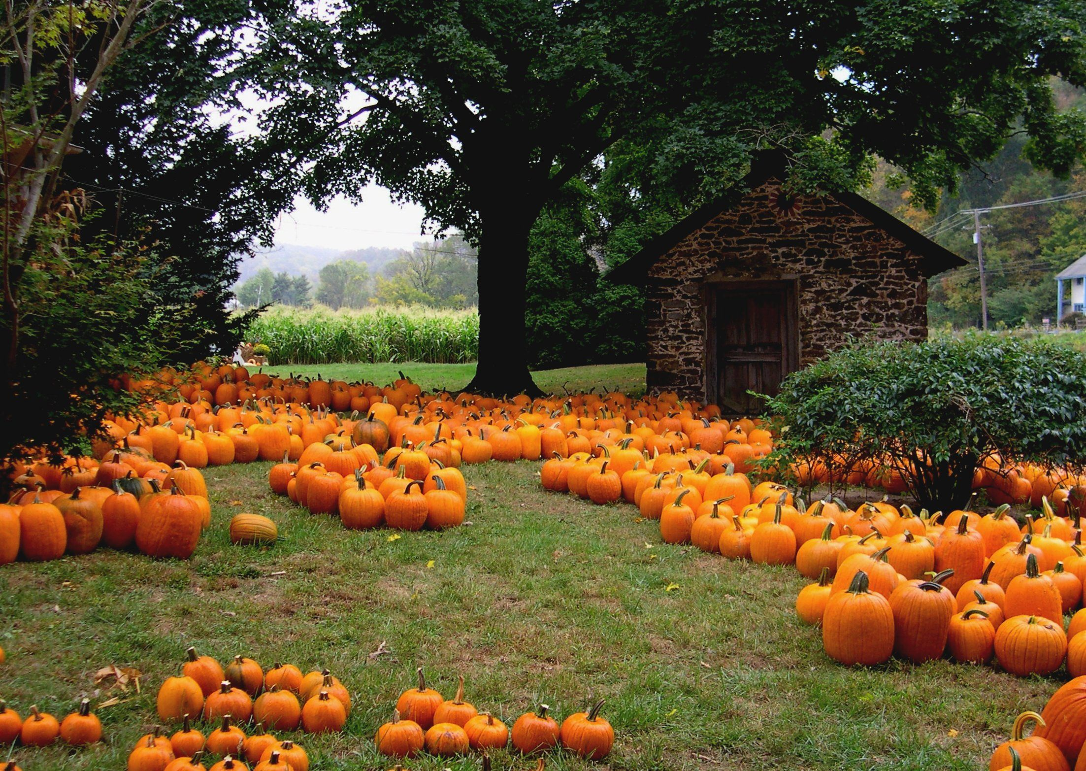 11 things to do in the fall with your friends - Fall Pumpkins