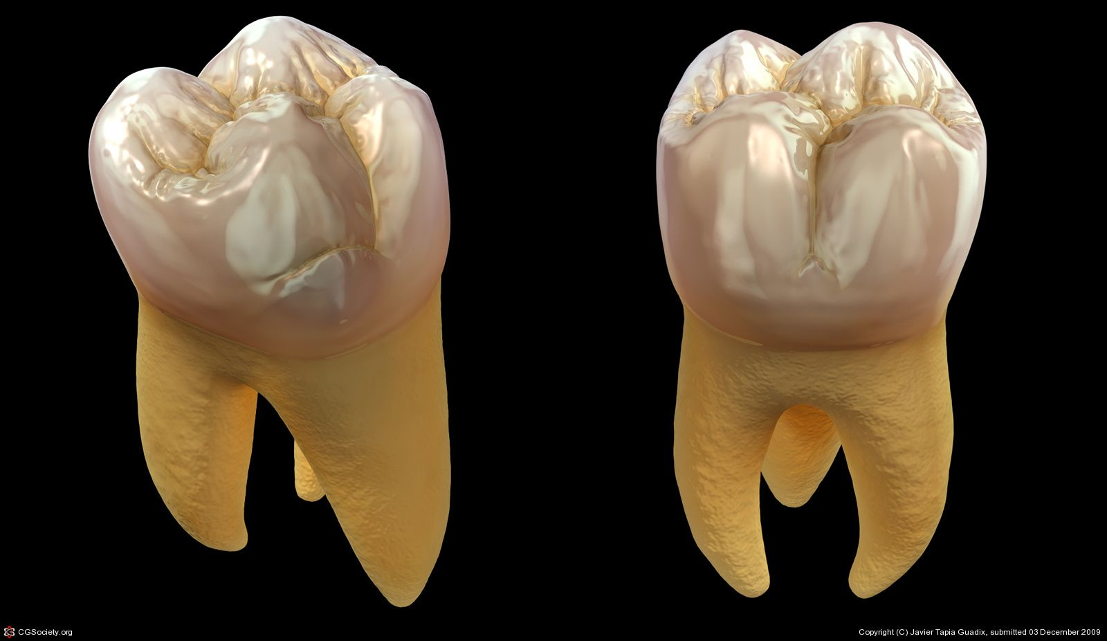 First Upper Molar by Javier Tapia Guadix | 3D | CGSociety ...