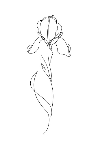 Iris Flower In One Line Art Drawing Style Black Line Sketch On White In 2020 Line Art Flowers Flower Line Drawings Line Art Drawings