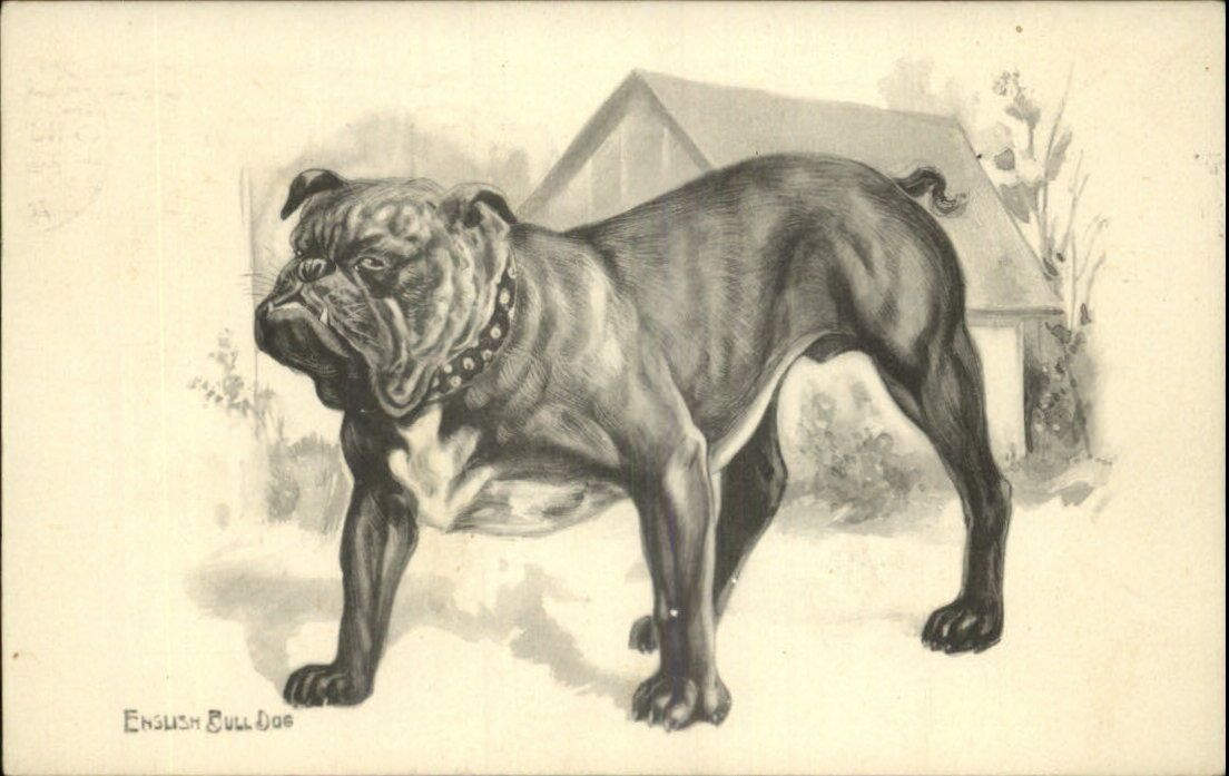 English Bulldog Bull Dog in Front of Doghouse c1910 Postcard