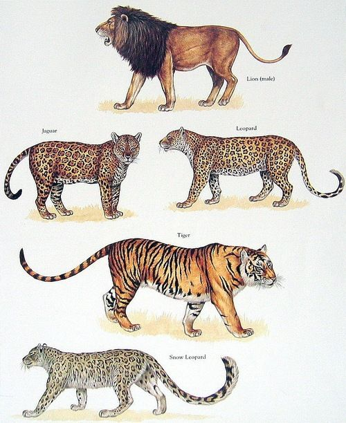 Kingdom Of The Cats Wild Cats Animals Wild Animals