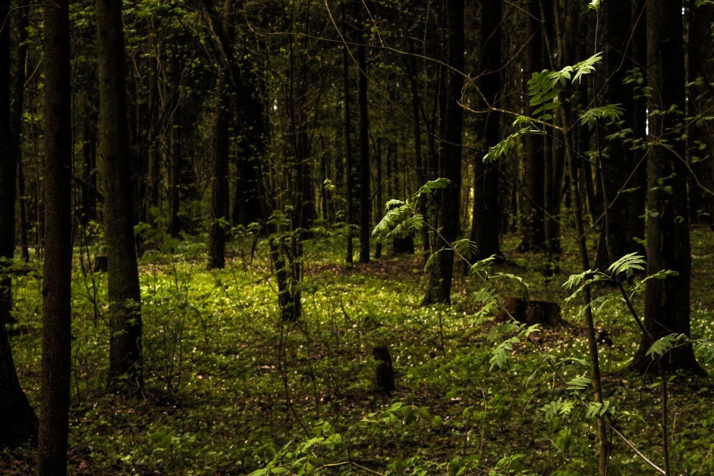 елка фото в лесу: 11 тыс изображений найдено в Яндекс ...