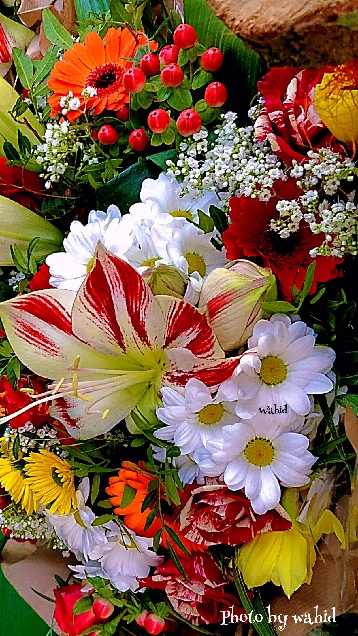 Pin by Kati Valovics on flowers Beautiful flowers