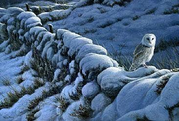barn owl on stone fence