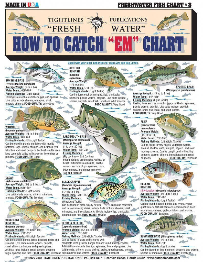 How To Catch Each Fish Chart Troutfishingtips Fish Chart Catching Fish Freshwater Fishing