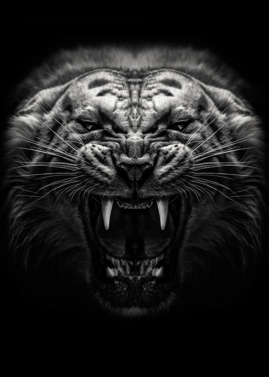 Angry Tiger Poster Metal Poster Print Mk5 Studio Displate In 2020 Tiger Poster Angry Tiger Tiger Photography