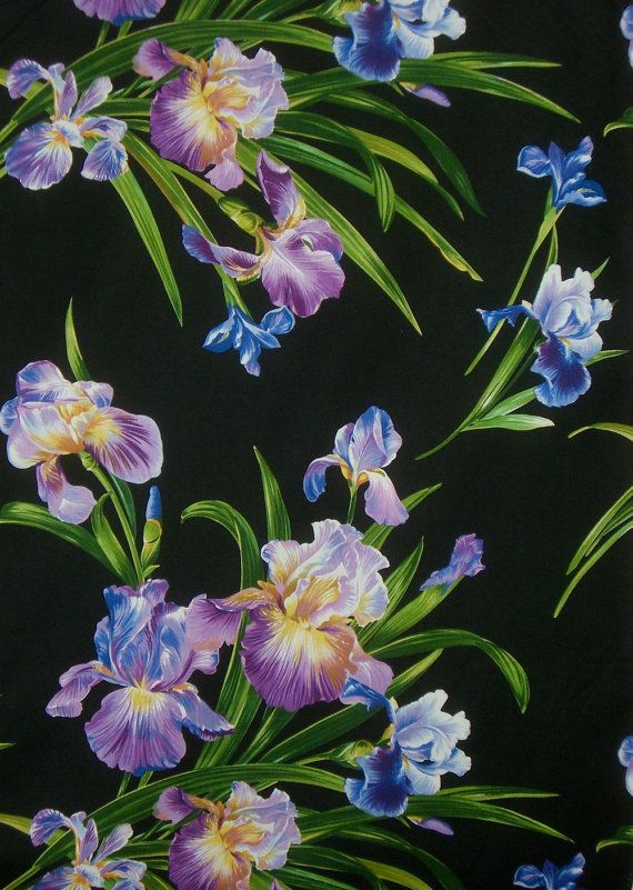 Striking Primavera Iris Print Pure Cotton By Fabricsandtrimmings 9 98 Michael Miller Fabric Iris Flowers Fabric Flowers