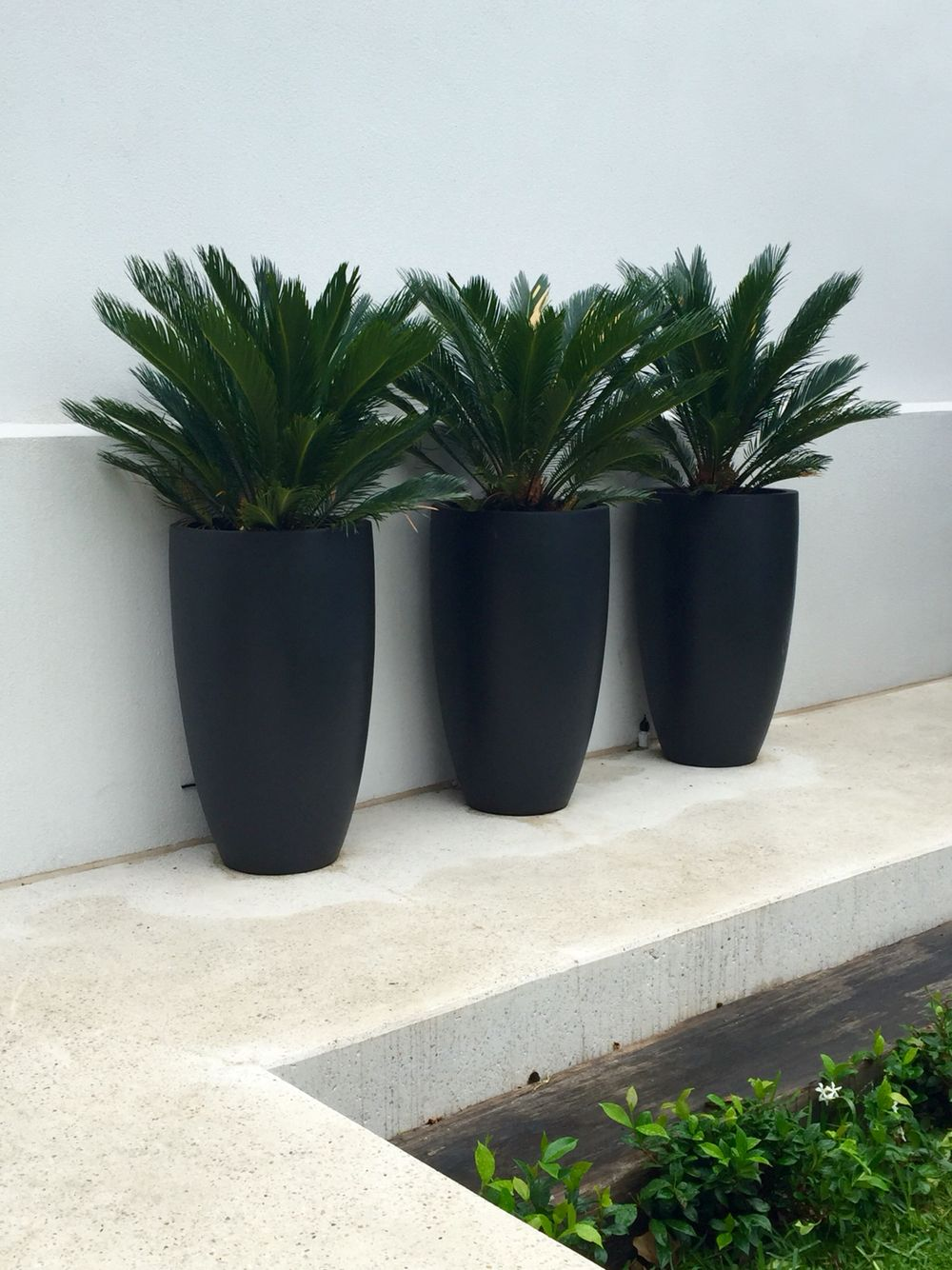 planters tall matt black planters with cycads nadia. Black Bedroom Furniture Sets. Home Design Ideas