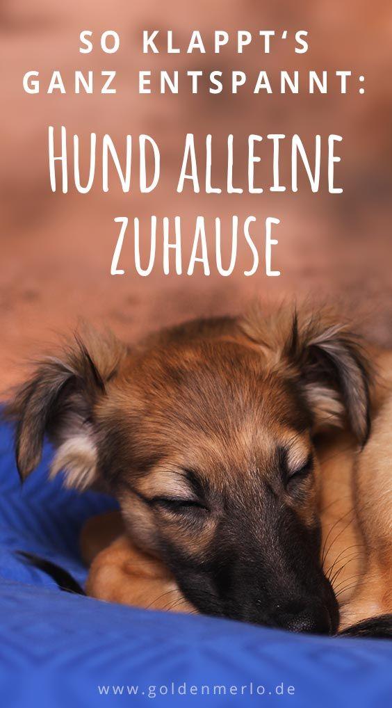 Viele Hunde Bleiben Nicht Gerne Alleine Zuhause Mithilfe Dieser