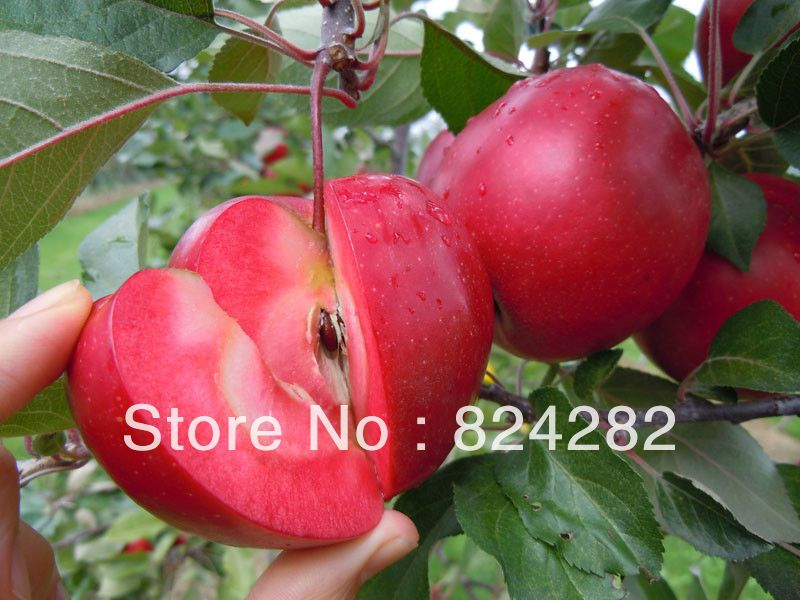 3 Cuttings Of Rare Varieties Redlove Red Meat Apple Tree In Bonsai From Home Garden On