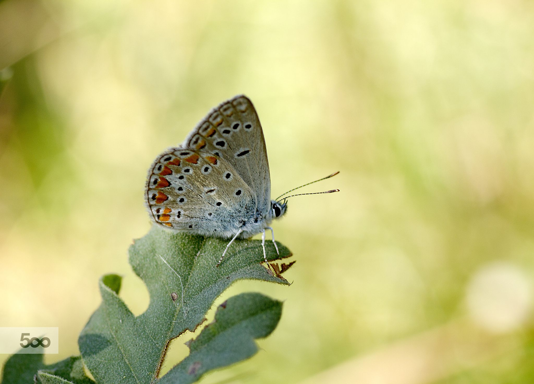 Butterfly by ismail kilic on 500px