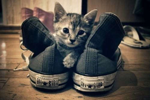 Kitten Converse High Tops