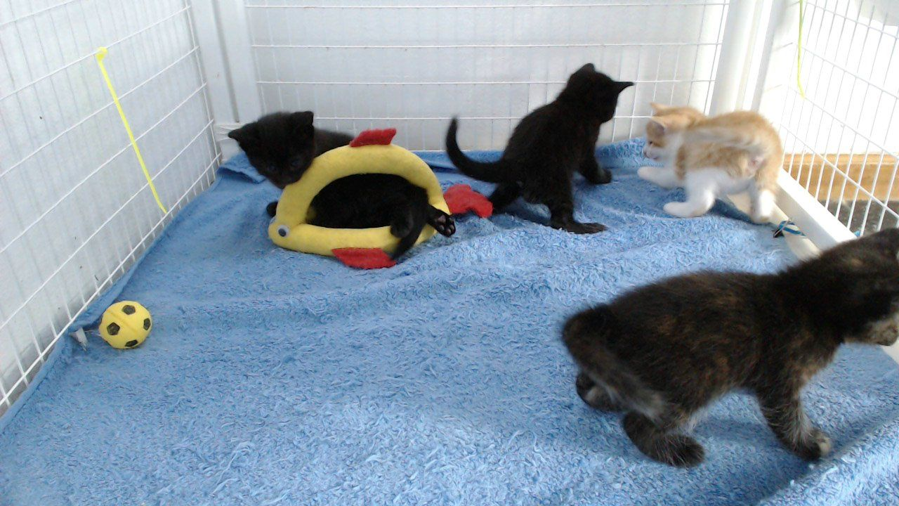 Epic Play Time With Dramatic Ending The Fosters Kitten Live Streaming