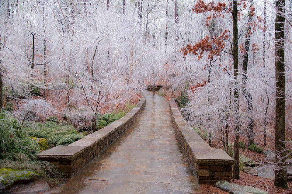 Wintertime In Garvan Woodland Gardens In Hot Springs Ar