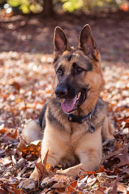 Dog Auf Deutsch