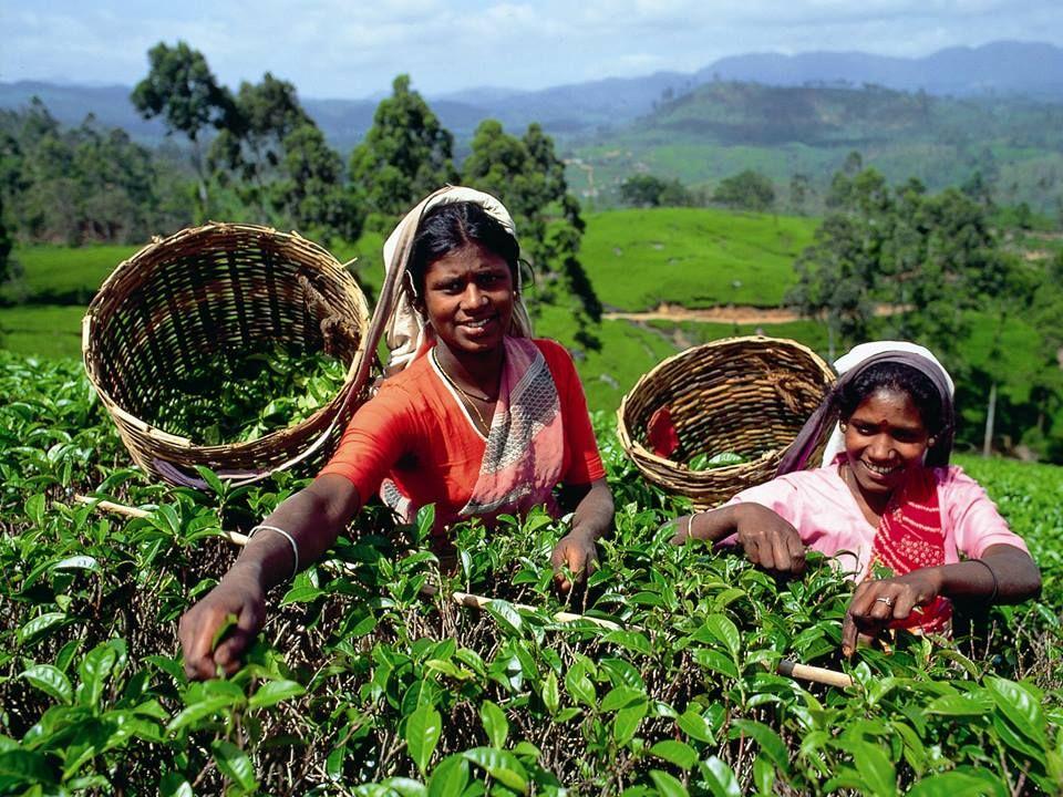 au Sri-Lanka