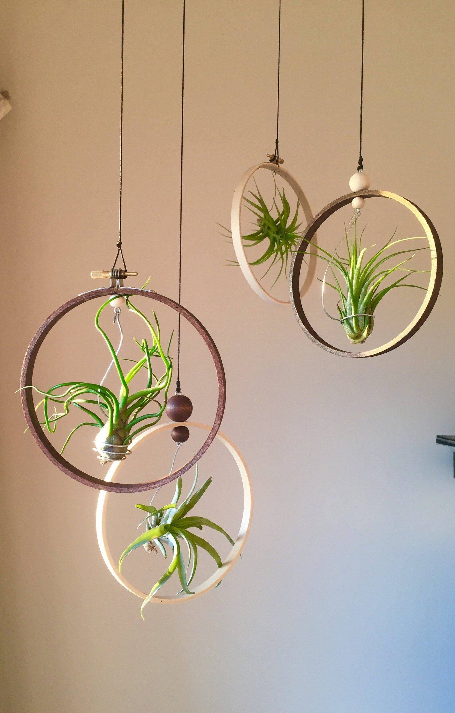 4-Pack Mixed Air Plant Set, Gift Idea, Hanging Tillandsia Holder, Terrarium, Airplants Display, Indoor Wood Planter, Plant Hanger, Wall Hang -   16 plants Hanging crafts ideas
