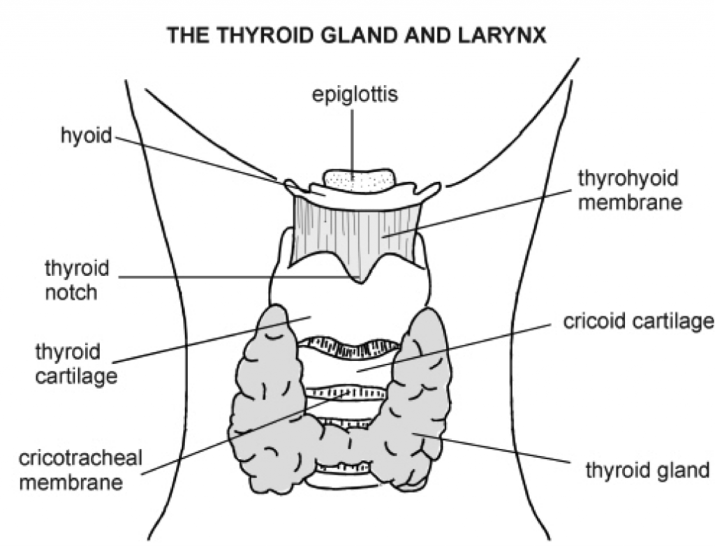 Testing Your Thyroid The Definitive Guide To Optimal Ranges
