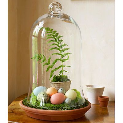 This superfast arrangement showcases the delicate tints of dyed chicken eggs and plain quail eggs. Just fill a terracotta saucer with craft-store moss, add a potted fern, and cover with a glass bell jar — done! #Easter
