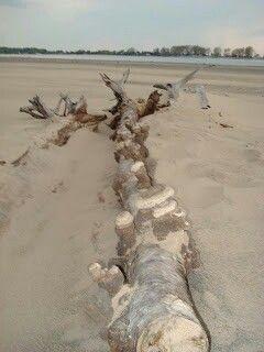 Fulgurite When Lightning Strikes Beach Sand