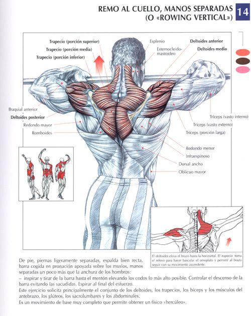 Ejercicio hombro ejer hombros pinterest ejercicios for Rutinas gimnasio