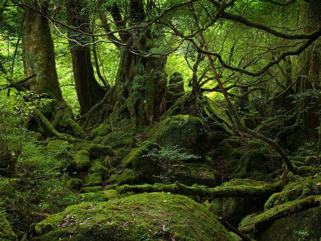 Fotografias de bosques paisajes de bosques y selvas bellos