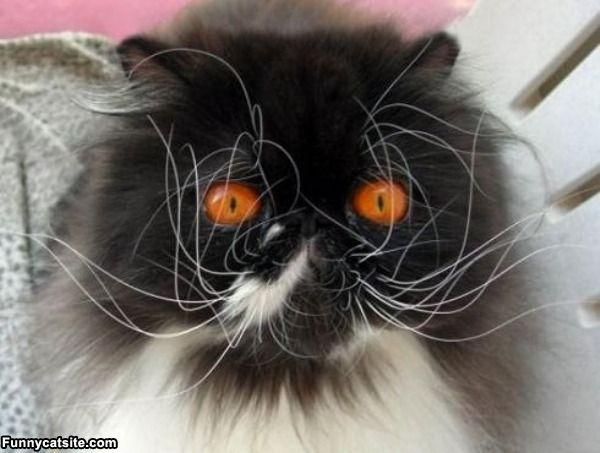 Scruff Whiskers - funnycatsite.com#cats #funny #cute