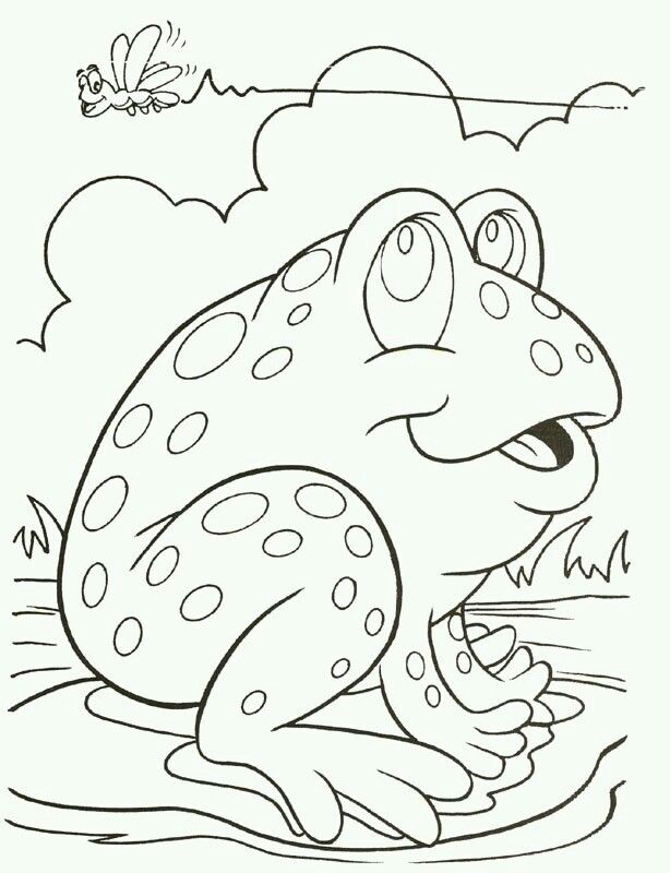 Toad Coloring Page Frog Coloring Pages Animal Coloring Pages