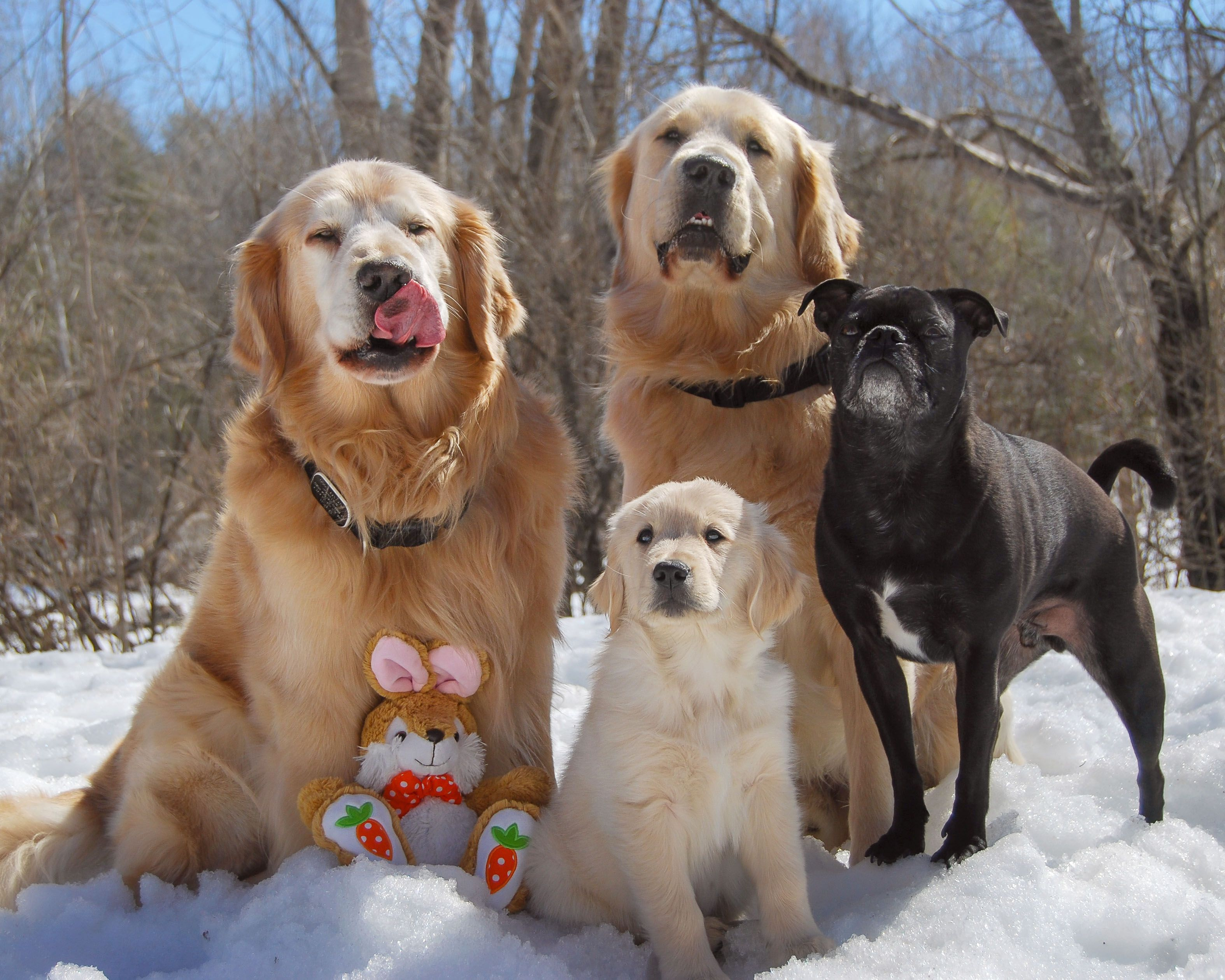 Happy Easter From This Wild Pack With Images Animals