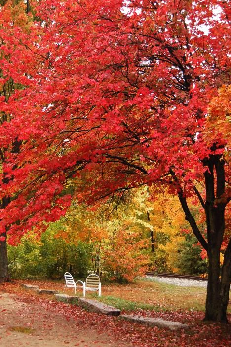 New Hampshire Foliage Driving Tour - Yankee Foliage - Your Source for New England Fall Foliage