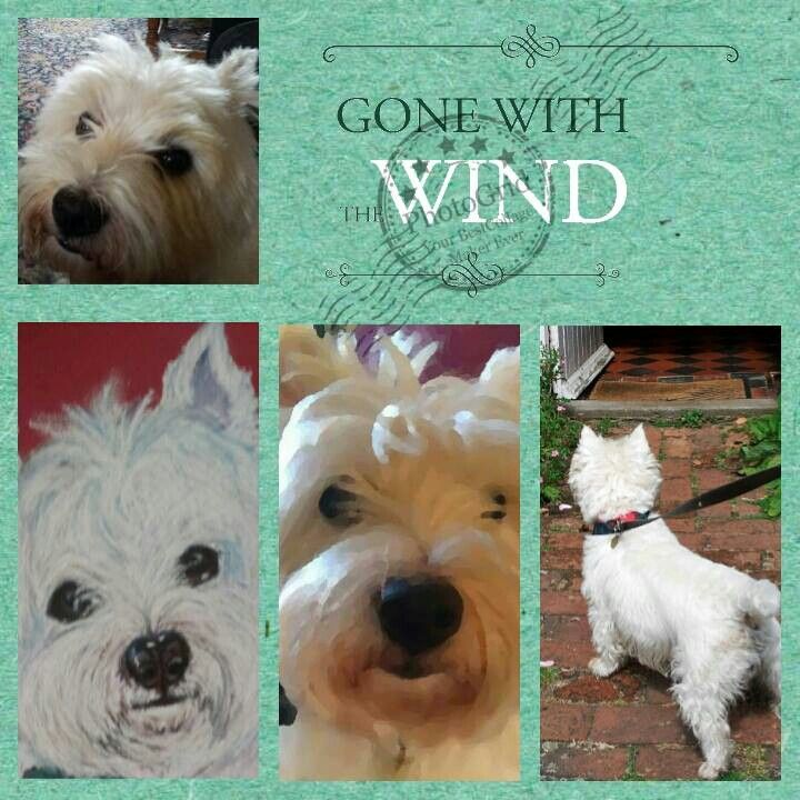 Westie Collage Westies Animals Dogs