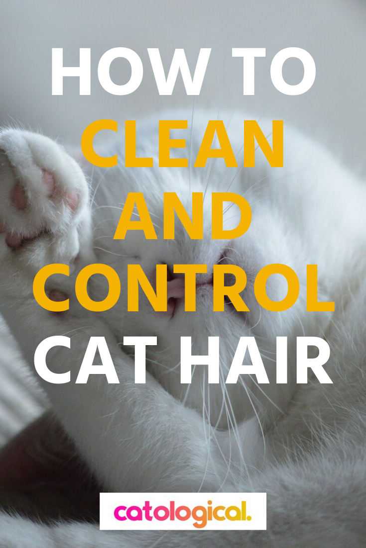 How To Clean And Control Cat Hair In 2020 Cat Hair Cat Care Cat Grooming