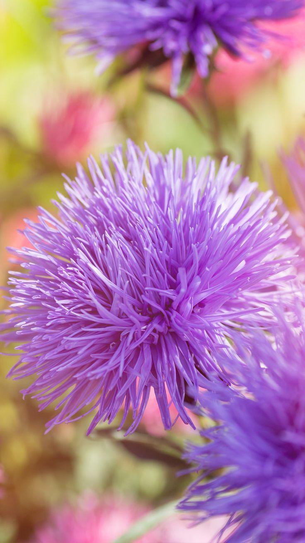 Macro Flowers Beautiful Up Close Lovely Purple Beauty