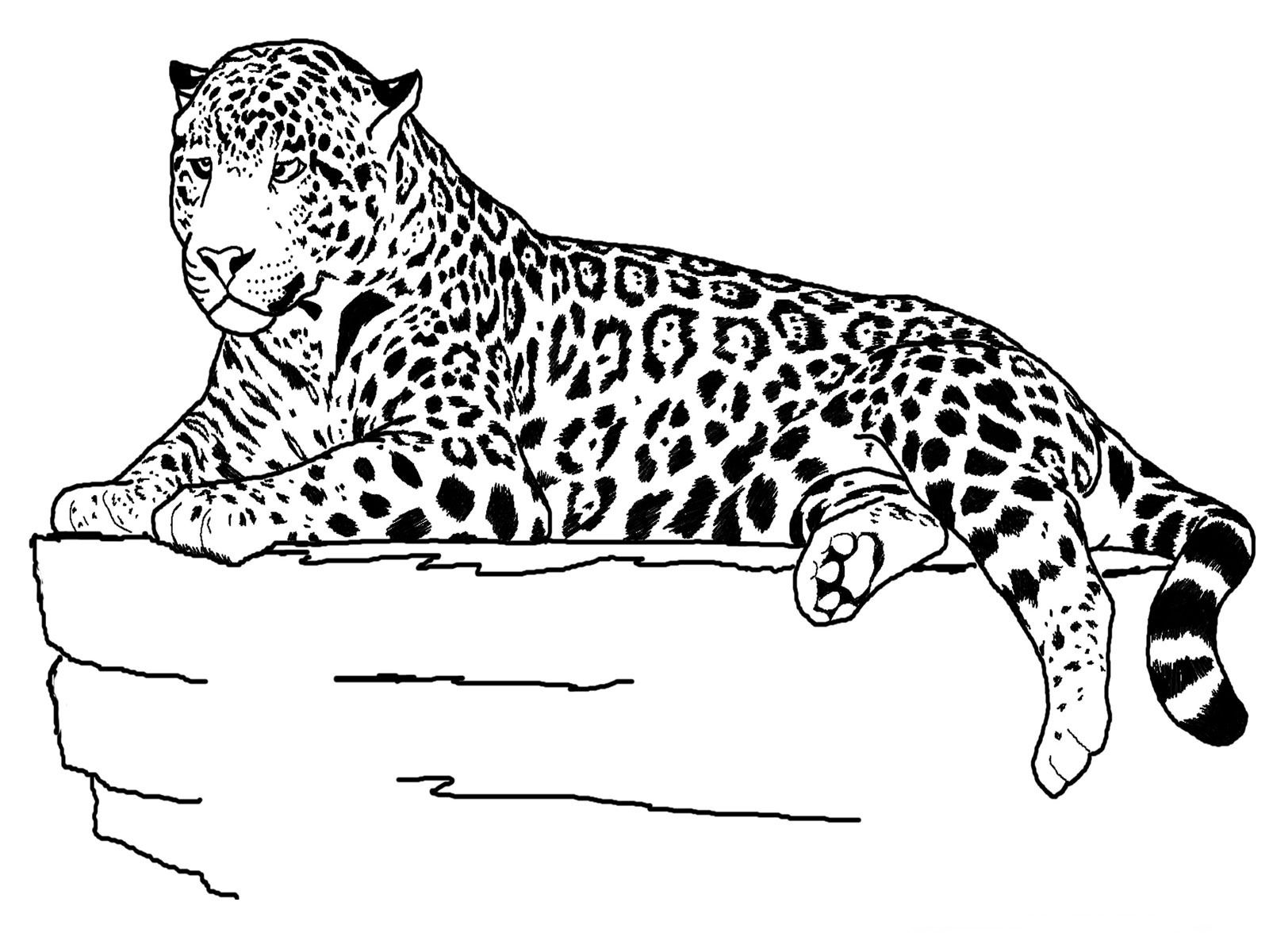free printable cheetah coloring pages for kids - Free Animal Coloring Pages