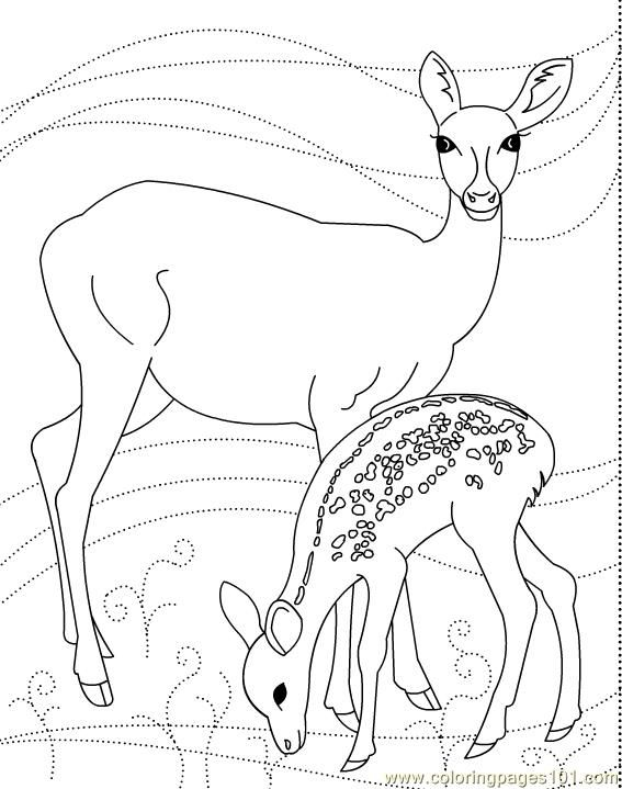 Deer N Son Deer Coloring Pages Coloring Pages Free Coloring Pages