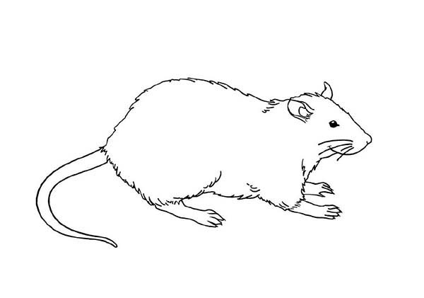 Mother Of Mouse And Rat Coloring Pages Bulk Color Coloring Pages Color Coloring Pictures