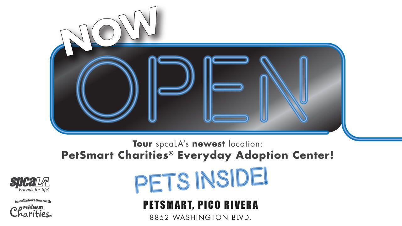 35 135 Years In Los Angeles Ideas Los Angeles Animal Heros Pet Adoption Center