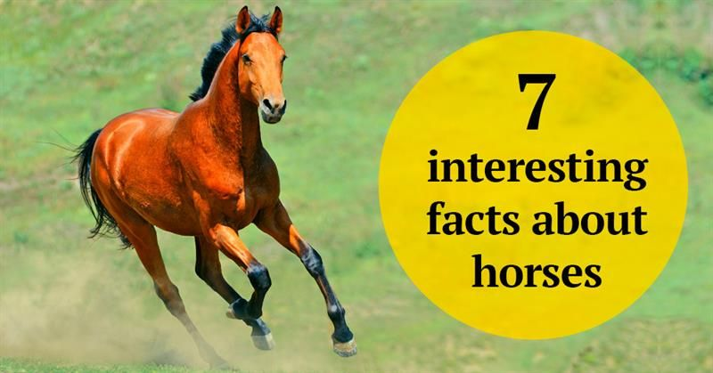 The Noblest Of All Creatures 7 Interesting Facts About