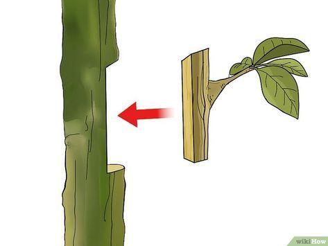 Graft a Tree