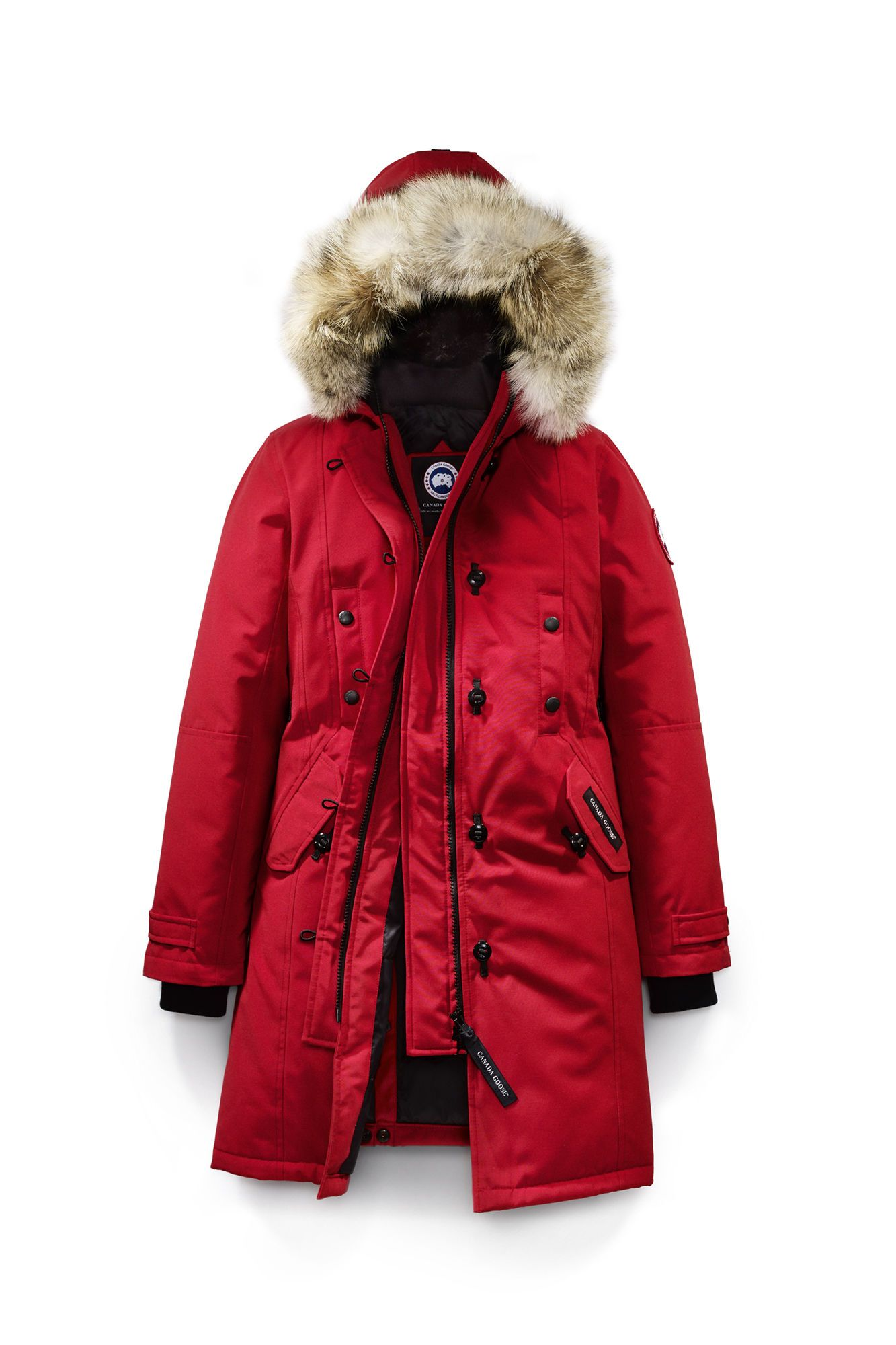 canada goose fur and rain